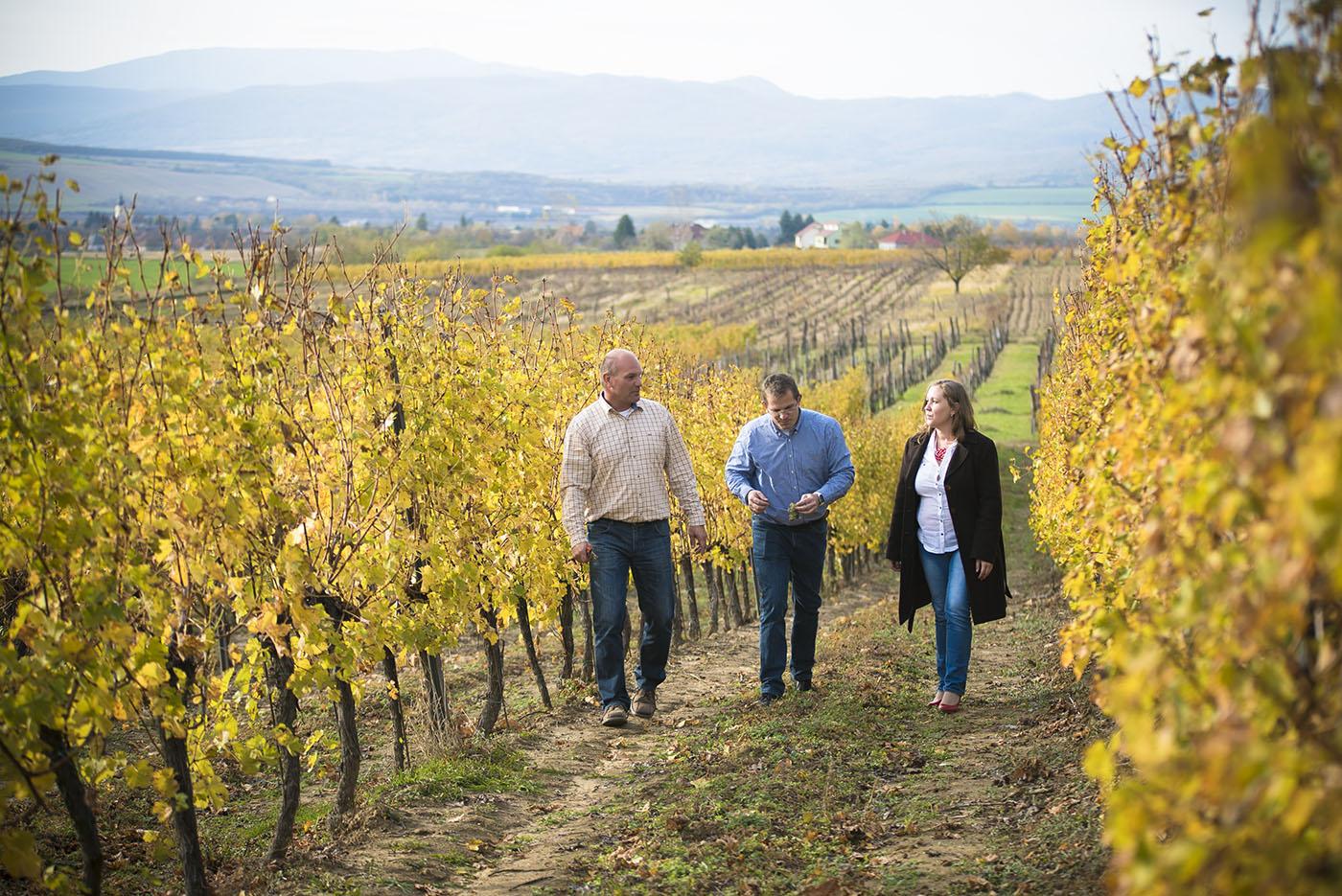 A Varsányi Pincészet szőlőbirtoka Verpelét határában